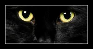 68 - Dans les yeux des chats 1