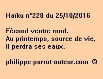 Haïku n°228 du 251016