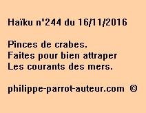 Haïku n°244 du 161116
