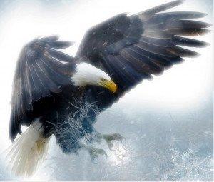 320 - L'aigle et les amants