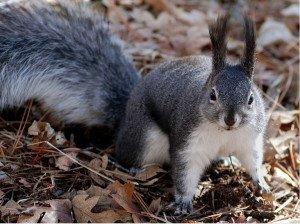 321 - L'écureuil et la fin du monde