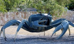 330 - Le crabe