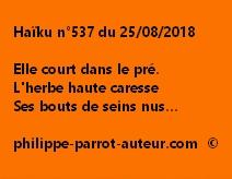 Haïku n°537  250818