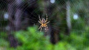 387 - Deux araignées