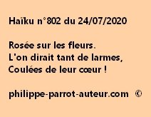 Haïku n°802 240720
