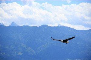 435 - L'aigle, le Temps et l'Infini