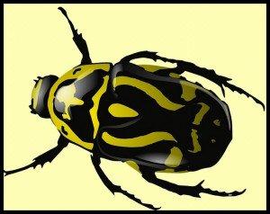 482 - Le scarabée d'or